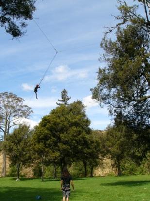 Tree adventures